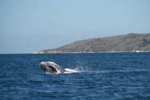 Whale Whatching